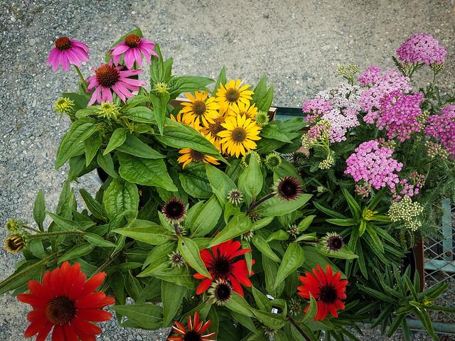 My take at Ballek's Garden Center