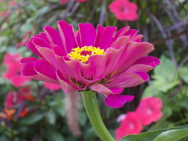 Toronto Ontario ~ Canada ~ Edwards Botanical Gardens ~  Abstract  Tubular  Flower