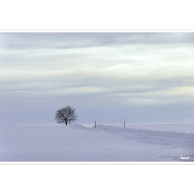 Baum und Straße