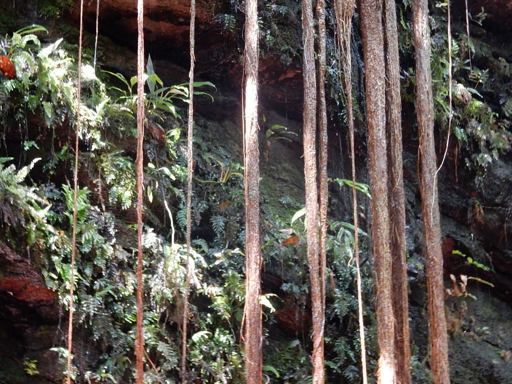 Jalapao-Velha Pedra Furada-20210115-NC56