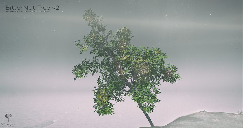 The Little Branch - Bitternut Tree v2 - Shiny Shabby