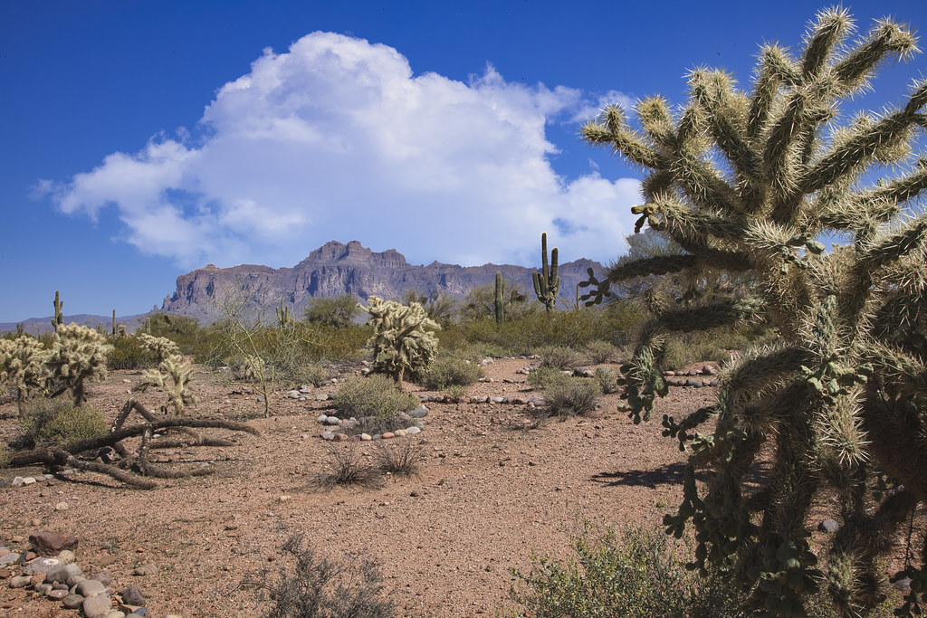 Desert near Superstition Mountains 4