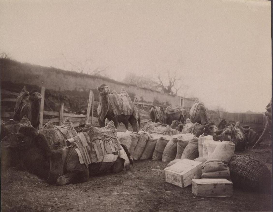 Заезжий двор. Караван верблюдов и кульки с персидскими фруктами