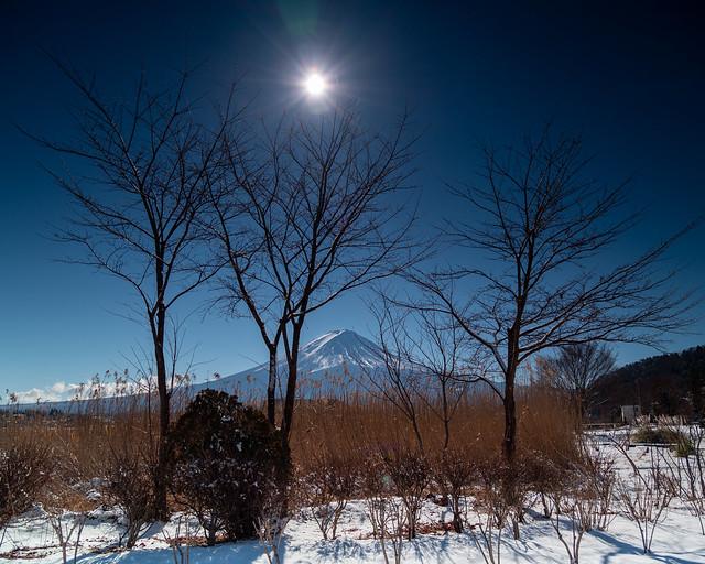 Winter Sun / 冬日