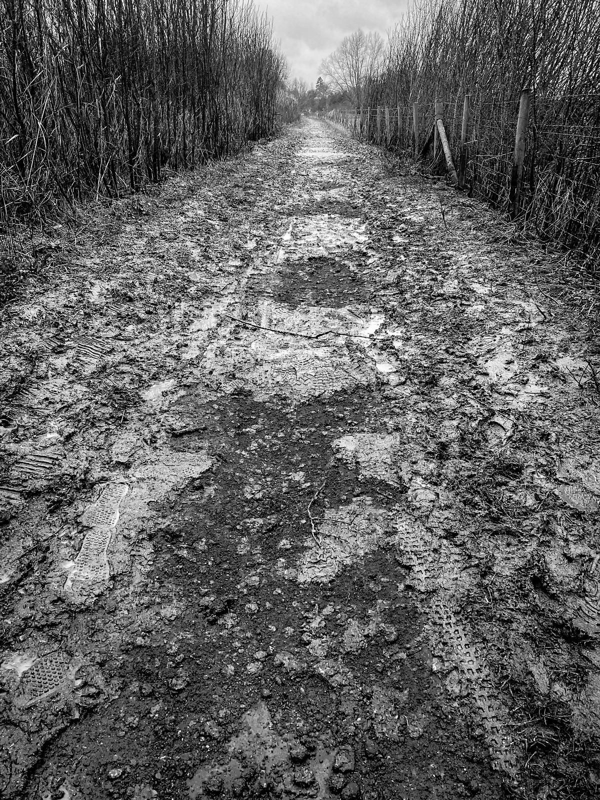 The Thames Path between Wallingford & Benson