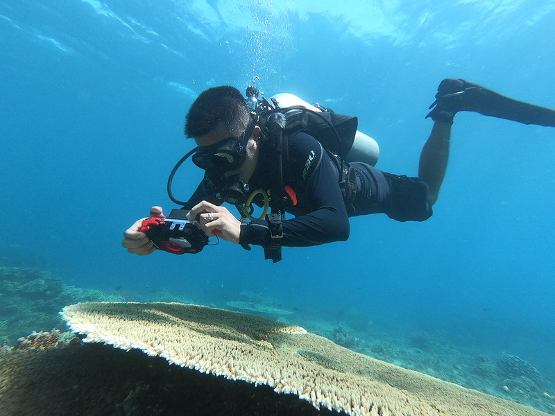 Diver taking a photo of a coral reef