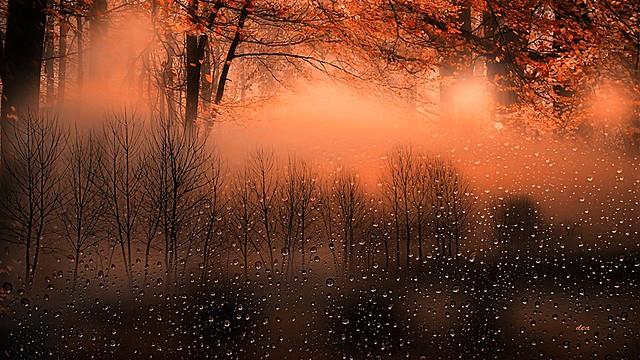 bare trees among the drops