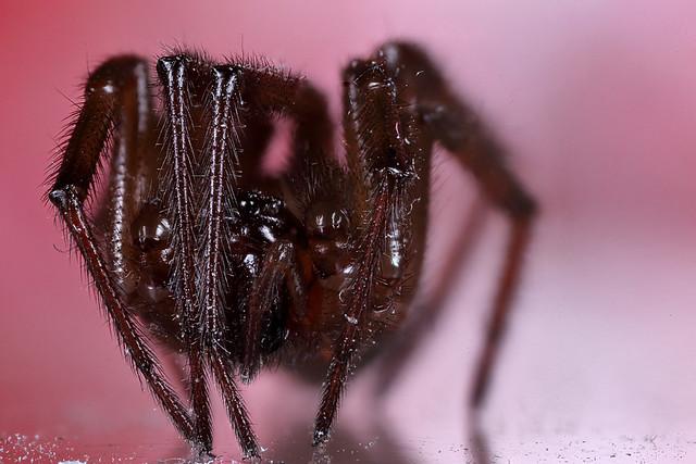 Peek a boo spider