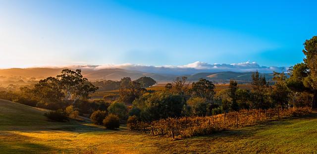 Barossa Wine Country, South Australia