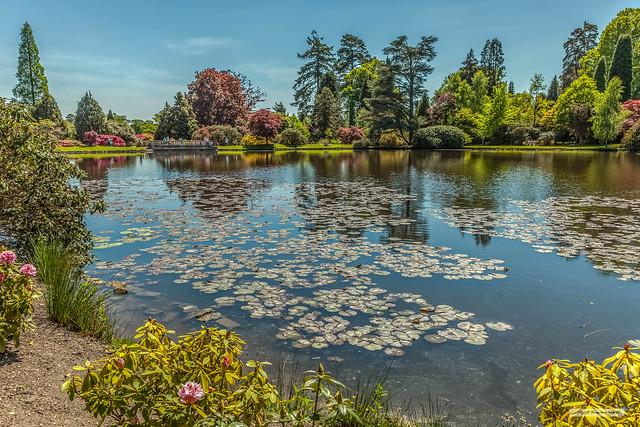 Summer splendour of Sheffield Park Gardens, East Sussex.