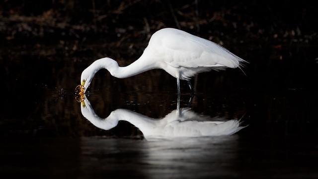 Kerplunk - egret 1