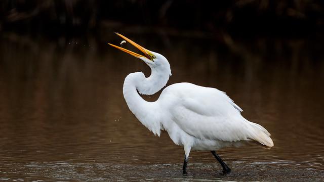 Bottoms up - egret 2