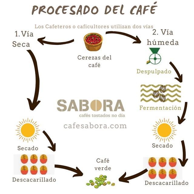 Los cafeteros o caficultores utilizan dos vías de procesado del café