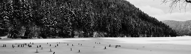 ...au Lac de Longemer (Alt : 736m)