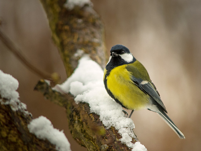Birds in the Garden (I)