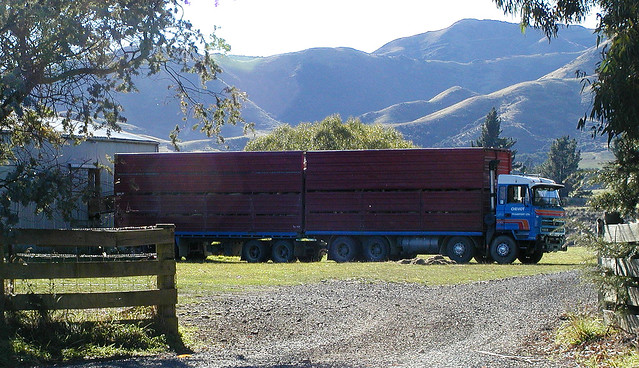 Cheviot transport sheep truck