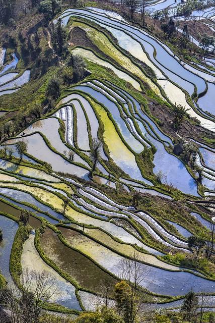 *Laohuzui terrace landscape @ portrait format*