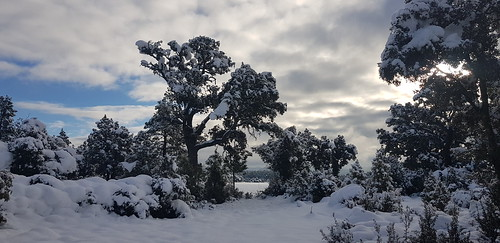 Nieve Carrasca 8
