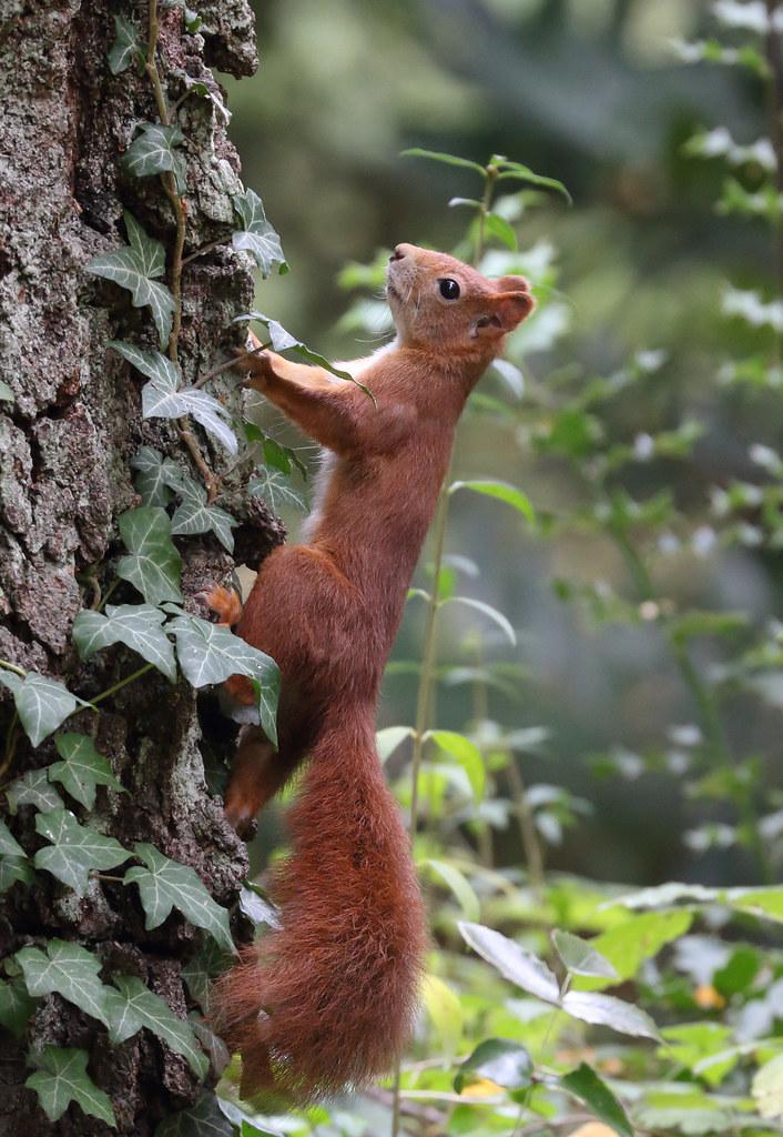 Squirrel Appreciation Day, 21th January, 2021