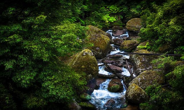 River Scene # 2