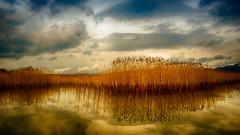 winter lake  (由  nature explored