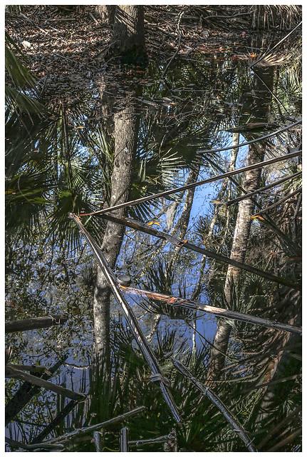 Lake Woodruff #5 2021; Swamp Reflection