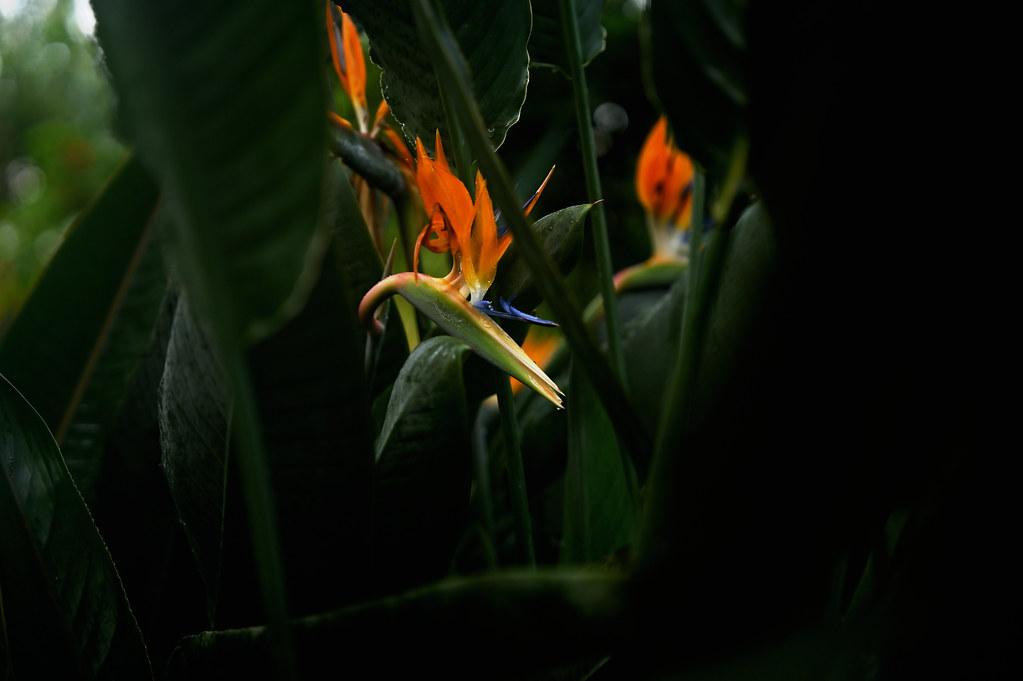 NZ6_0610