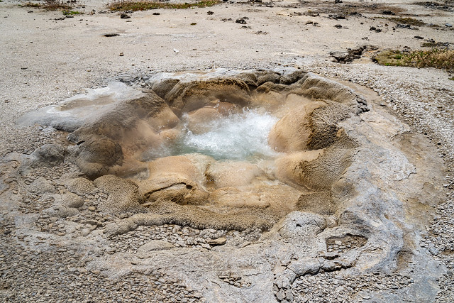 Shell Spring, a bubbling hot spring geyser in Biscuit Basin, a thermal feature area of Yellowstone National Park