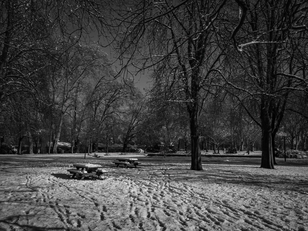 Il a neigé sur le Parc... 50860331856_0cc8d2c31f_b