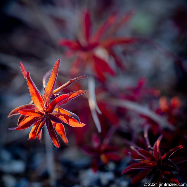 Red in the Rock Garden