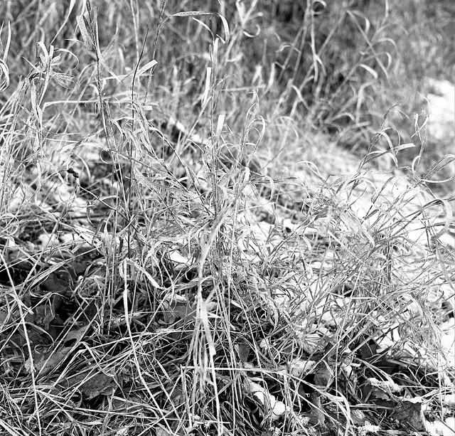冬草 / Winter grass