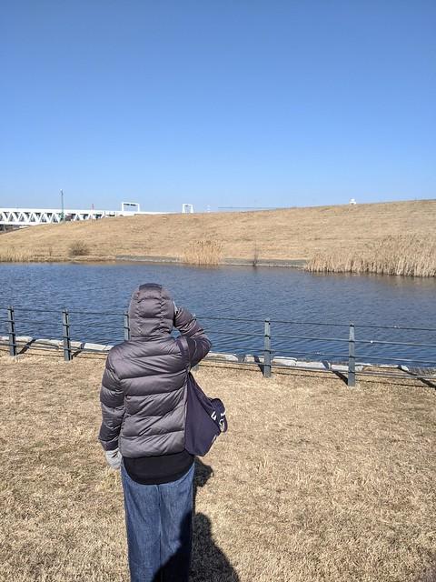 バードウォッチング@新横浜公園