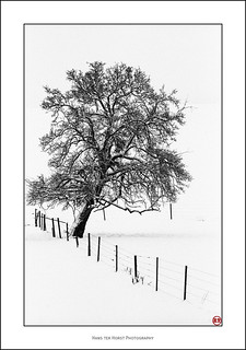 Tree in the snow | by Hans ter Horst Photography