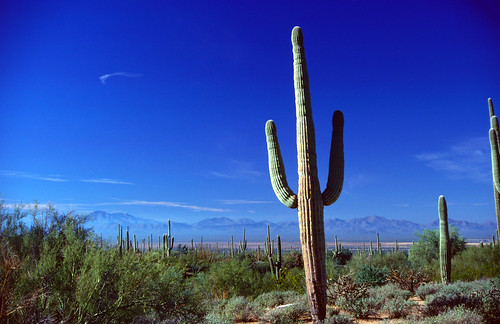 Saguaro National Monument (8)