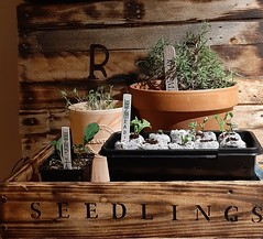 """ Seedlings """