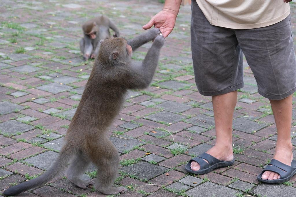 壽山動物園的餵食者。劉羽芯攝。