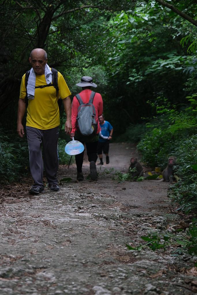 遊客出現的地方,獼猴也隨之出現。劉羽芯攝。