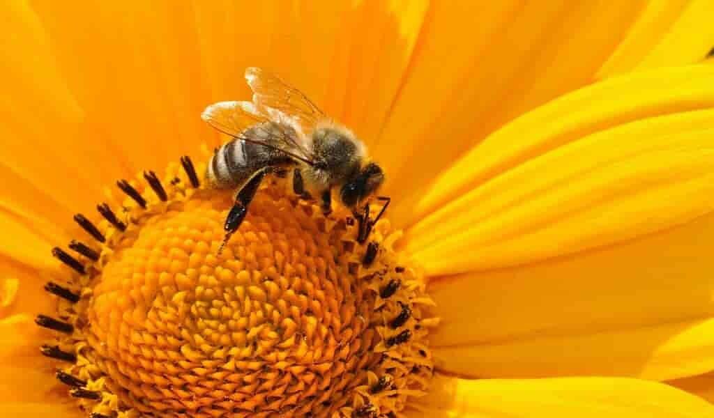 des-pesticides-empêchent-les-insectes-de-bien-dormir