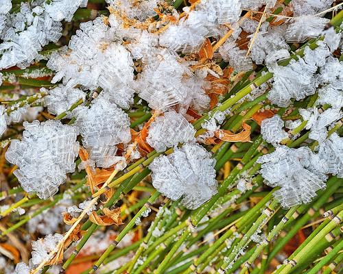 viewnxi eechillington nikond7500 corelpaintshoppro vivianpark provocanyon frost hiking utah nature