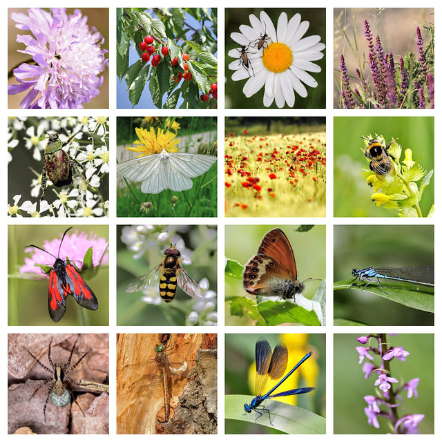 Insects & flowers