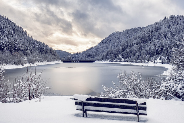 Black forest during winter. II