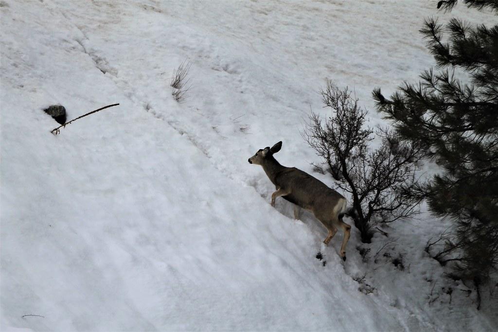Steep Snow Trail