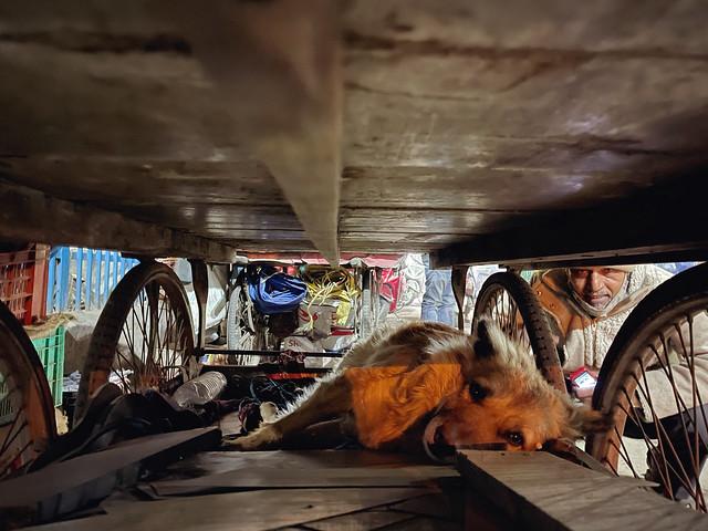 Mission Delhi - Bhoora, Turkman Gate