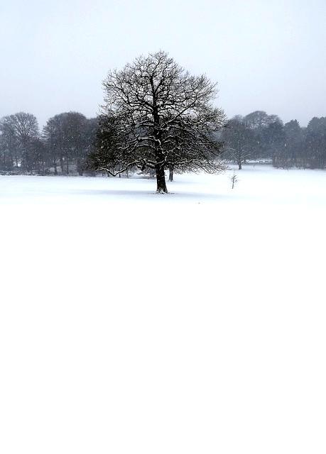 Snowing in Warley Woods. 13
