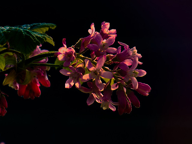 E216 Blumen, Flowers