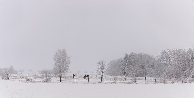 horses in the snow.....