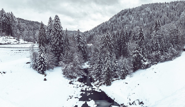Black forest during winter. III