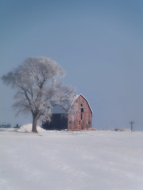 Chilly Barn and Tree
