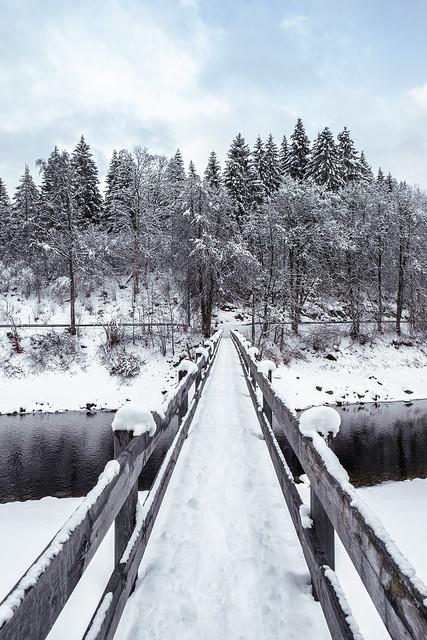 Black forest during winter. I