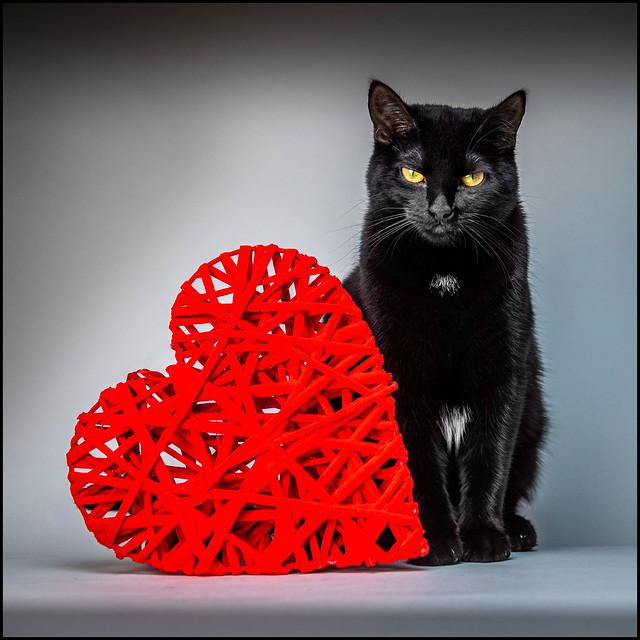 String Heart Kitty